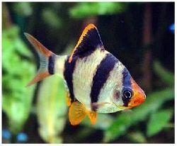 рыбы-хищники фото