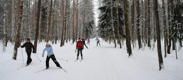 Для лыжной прогулки вам