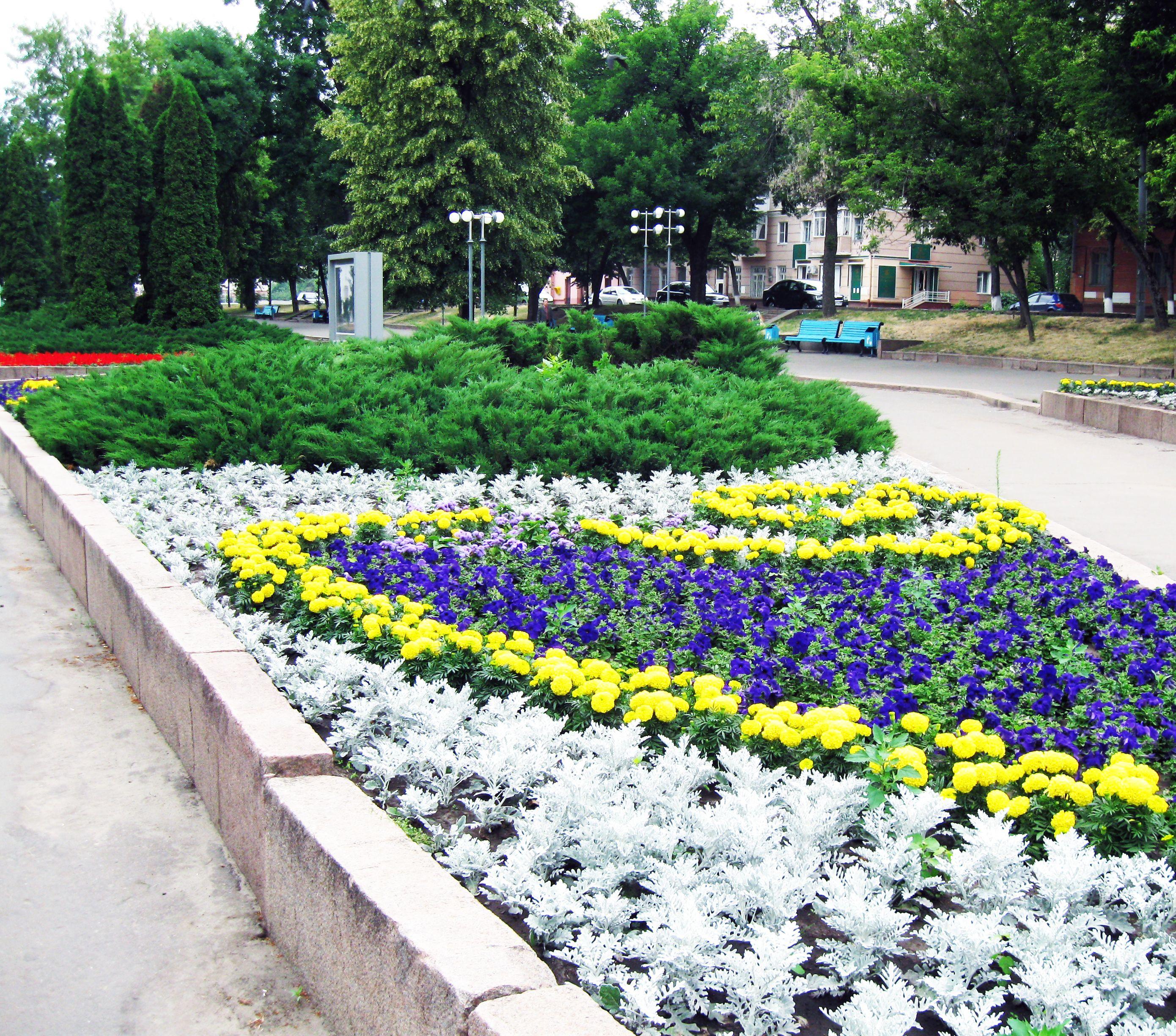 Цветы в городском озеленении фото