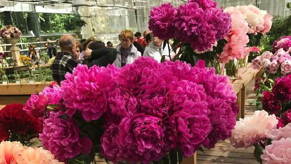 Клуб цветоводов москвы новинский эротические японские шоу для взрослых