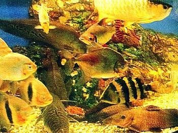 Болезни аквариумных рыб: профилактика, признаки и лечение - Жизнь в Москве